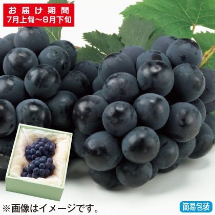 <※お中元対象商品>岡山県産種なしピオーネ 1kg