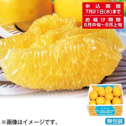 <※お中元対象商品>河内晩柑(ジューシーゴールド)