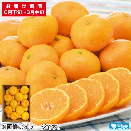 <※お中元対象商品>佐賀県産ハウスみかん 1.4kg