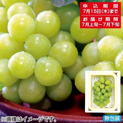 <※お中元対象商品>岡山県産 マスカット