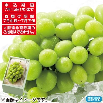 <※お中元対象商品>岡山県産シャインマスカット