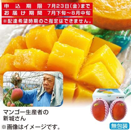 <※お中元対象商品>沖縄県産マンゴー