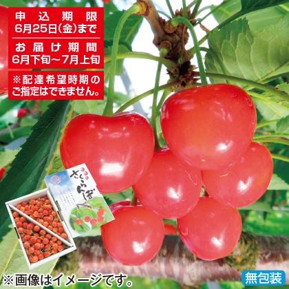 <※お中元対象商品>ご自宅向けさくらんぼ(佐藤錦)800g