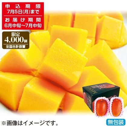 <※お中元対象商品>宮崎県産完熟マンゴー2個