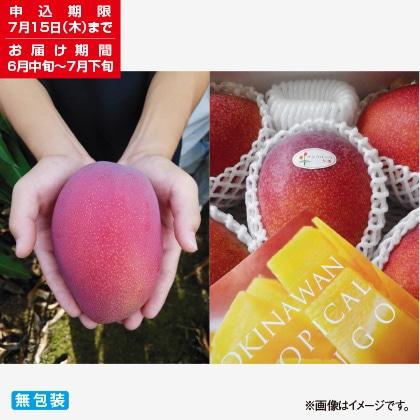 <※お中元対象商品>沖縄マンゴー 1kg