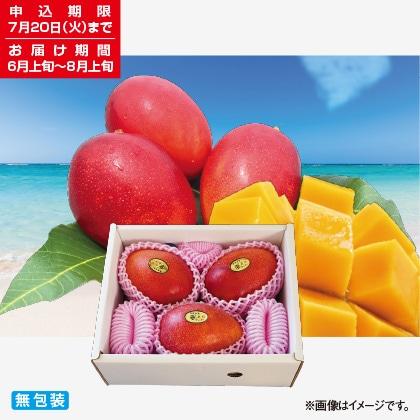 <※お中元対象商品>沖縄 燦々マンゴー 1.5kg