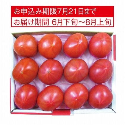 <※お中元対象商品>アメーラトマト