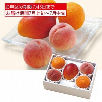 <※お中元対象商品>サン・フルーツ サマーフルーツセット