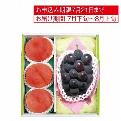 <※お中元対象商品>ピオーネ&山梨 御坂の水蜜桃