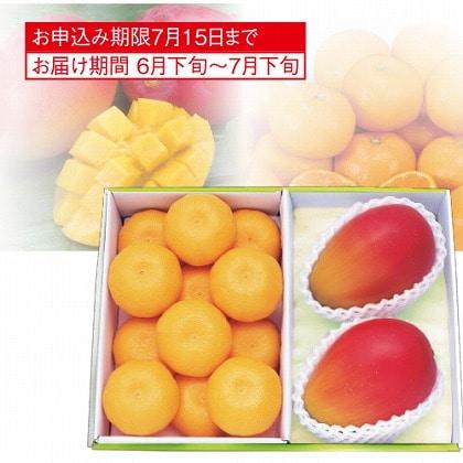<※お中元対象商品>マンゴー&ハウスみかん
