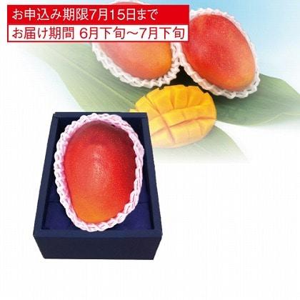 <※お中元対象商品>国産マンゴー(大玉)