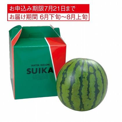 <※お中元対象商品>スイカ