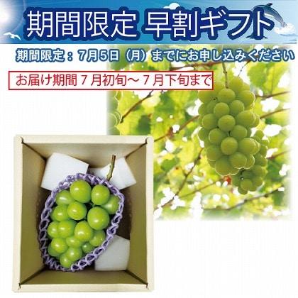 <※お中元対象商品>山梨県産 温室シャインマスカット