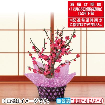 <※お歳暮対象商品>紅梅鉢植え
