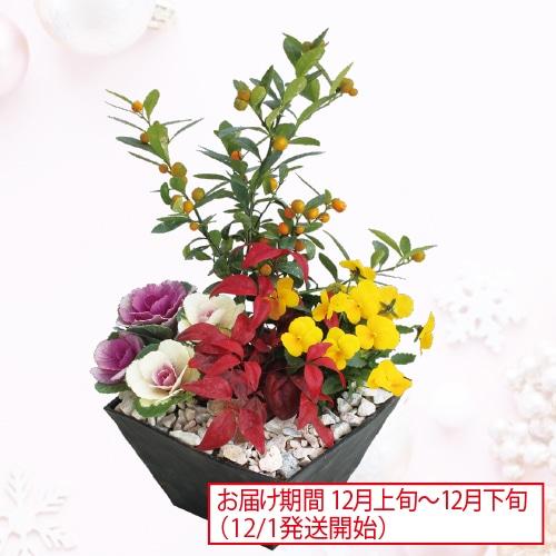 <※お歳暮対象商品>迎春寄せ植え