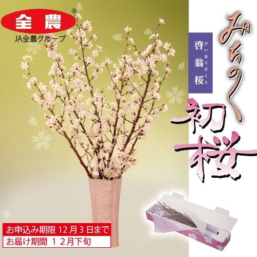 <※お歳暮対象商品>みちのく初桜(啓翁桜)