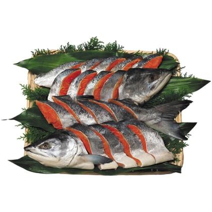 <※お歳暮対象商品>[手塩鮭]新巻鮭姿切り