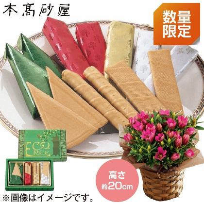 〈※敬老の日対象商品〉りんどう(ピンク)&本高砂屋エコルセ