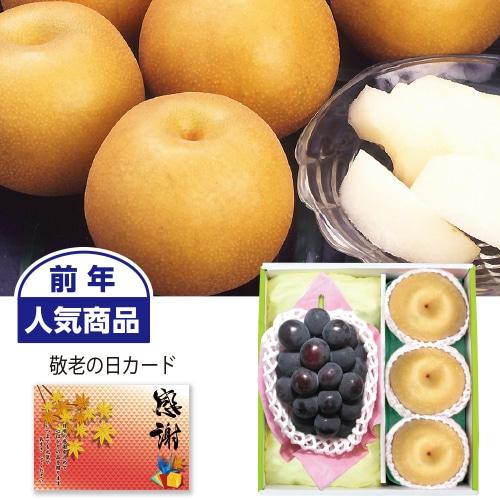 〈※敬老の日対象商品〉種なし巨峰&豊水梨