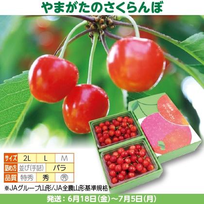 佐藤錦(2)350g(L又は2L、秀:バラ詰)×2、化粧箱入