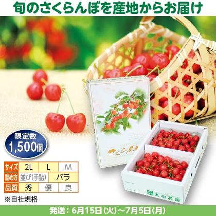 佐藤錦(10)500g(L又は2L、秀:バラ詰)×2
