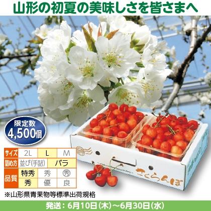 佐藤錦(24)500g(L、特秀・秀混:バラ詰)×2、化粧箱入