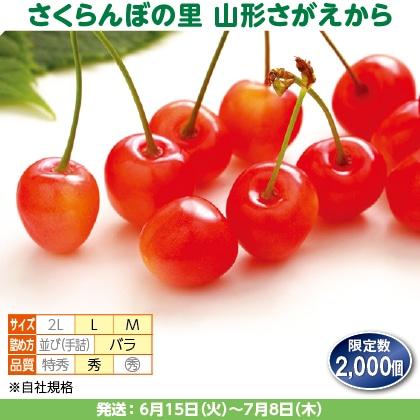 佐藤錦(31)1kg(M・L混、秀:バラ詰)