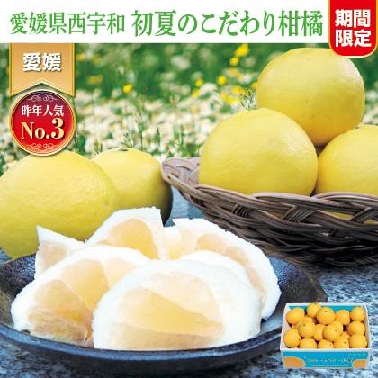 ニューサマーオレンジ(ご家庭用)