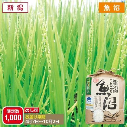 魚沼コシヒカリ特別栽培米 5kg(2020年産)