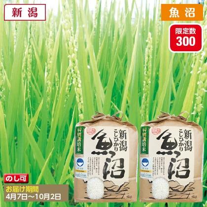 魚沼コシヒカリ特別栽培米 5kg×2(2020年産)