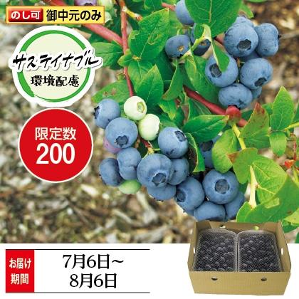 ブルーベリー1円玉サイズ(約直径20mm)以上