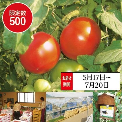 ひでちゃんの甘熟トマト