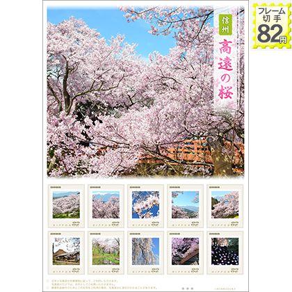 信州 高遠の桜