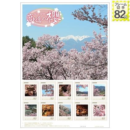 信州 伊那 高遠の櫻(82)