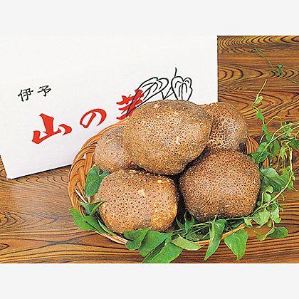 伊予の山の芋 2kg