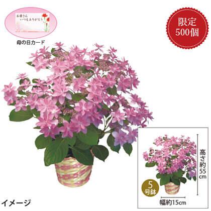 紫陽花ダンスパーティー