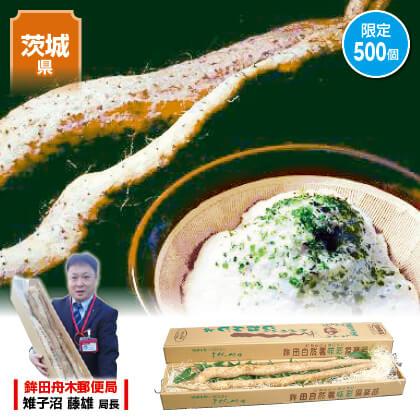 味彩倶楽部の自然薯 1.5kg