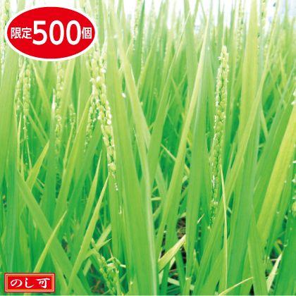 魚沼コシヒカリ特別栽培米5kg×2