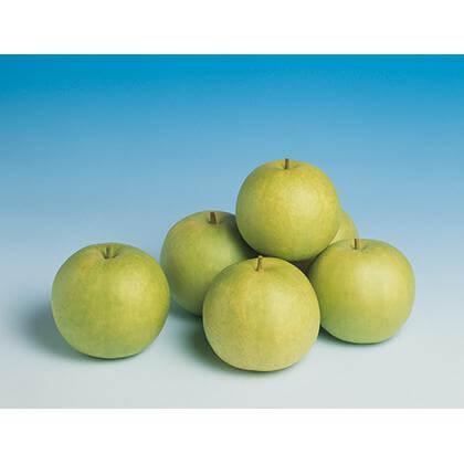鳥取の梨(二十世紀梨)