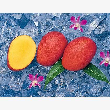 沖縄やんばるマンゴー 1.5kg