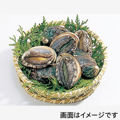 活アワビLLサイズ(殻長:7cm)
