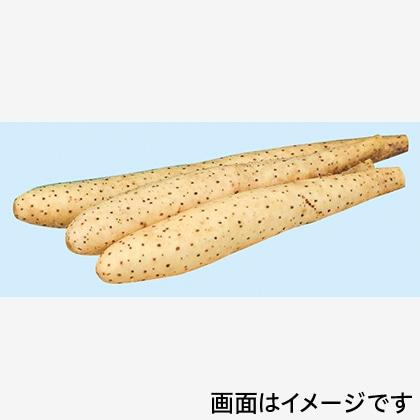 十勝川西長いも 2.5kg