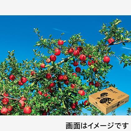 信州りんご サンふじ ご贈答用 5kg