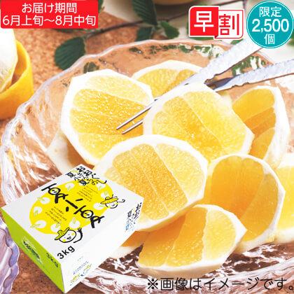 夏小夏(ナツコナツ)3kg