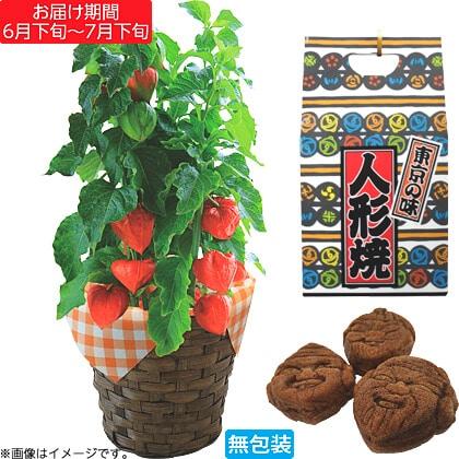 ほおずき鉢植と人形焼セット