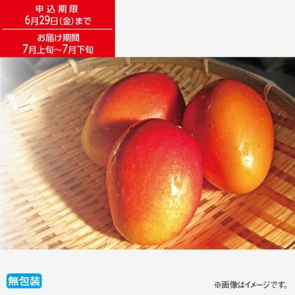 沖縄県産 マンゴー1kg