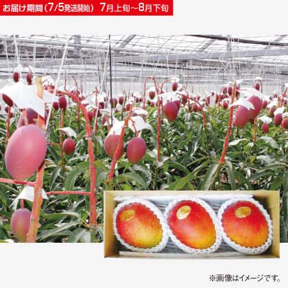 沖縄産完熟アップルマンゴー 1kg