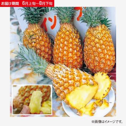 沖縄県産ボゴールパイン 2.5kg