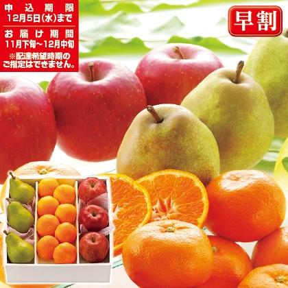 冬の果実・光彩