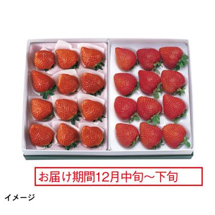 福岡 あまおう苺&栃木 とちおとめ苺